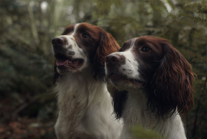 Two dogs looking expectantly