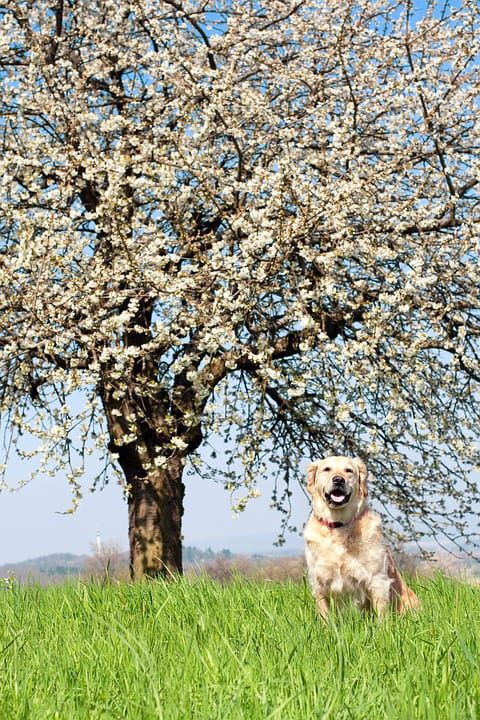 Skinner's celebrate National Pet Month 2019