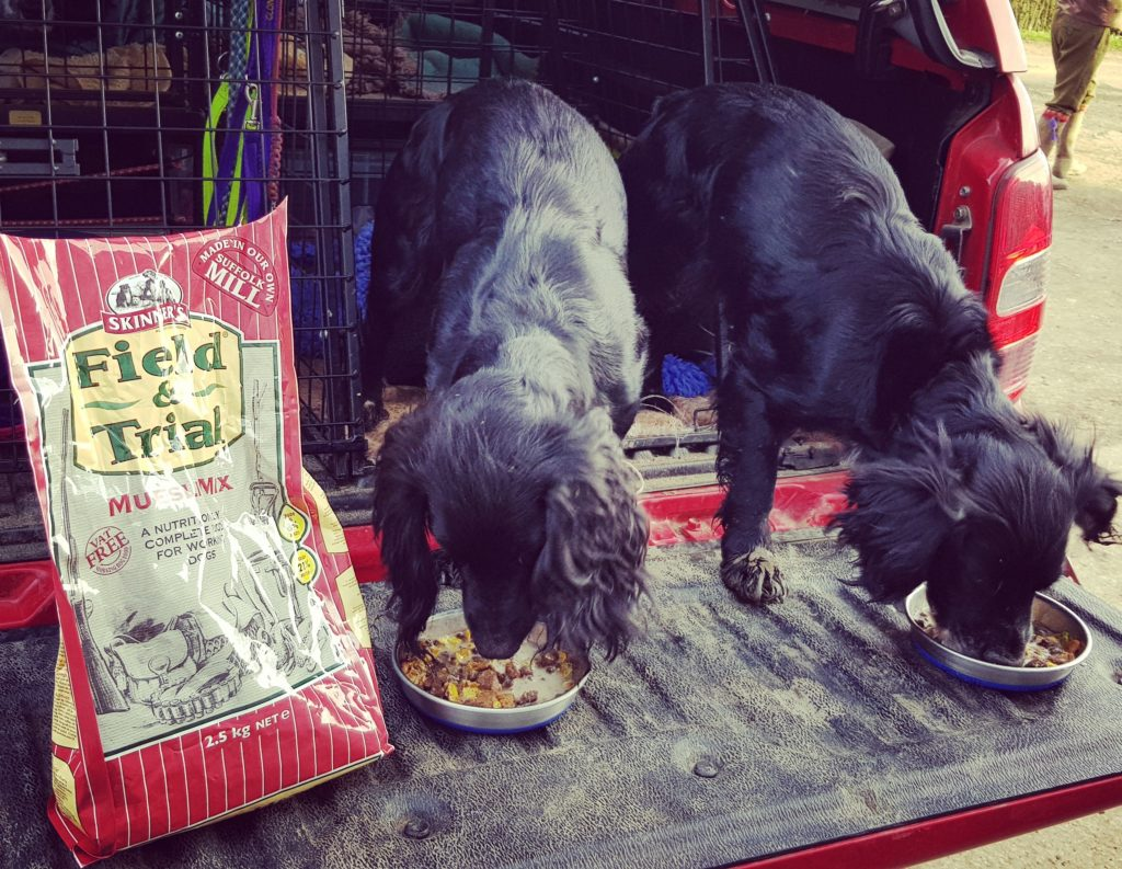 Active & Working Dogs