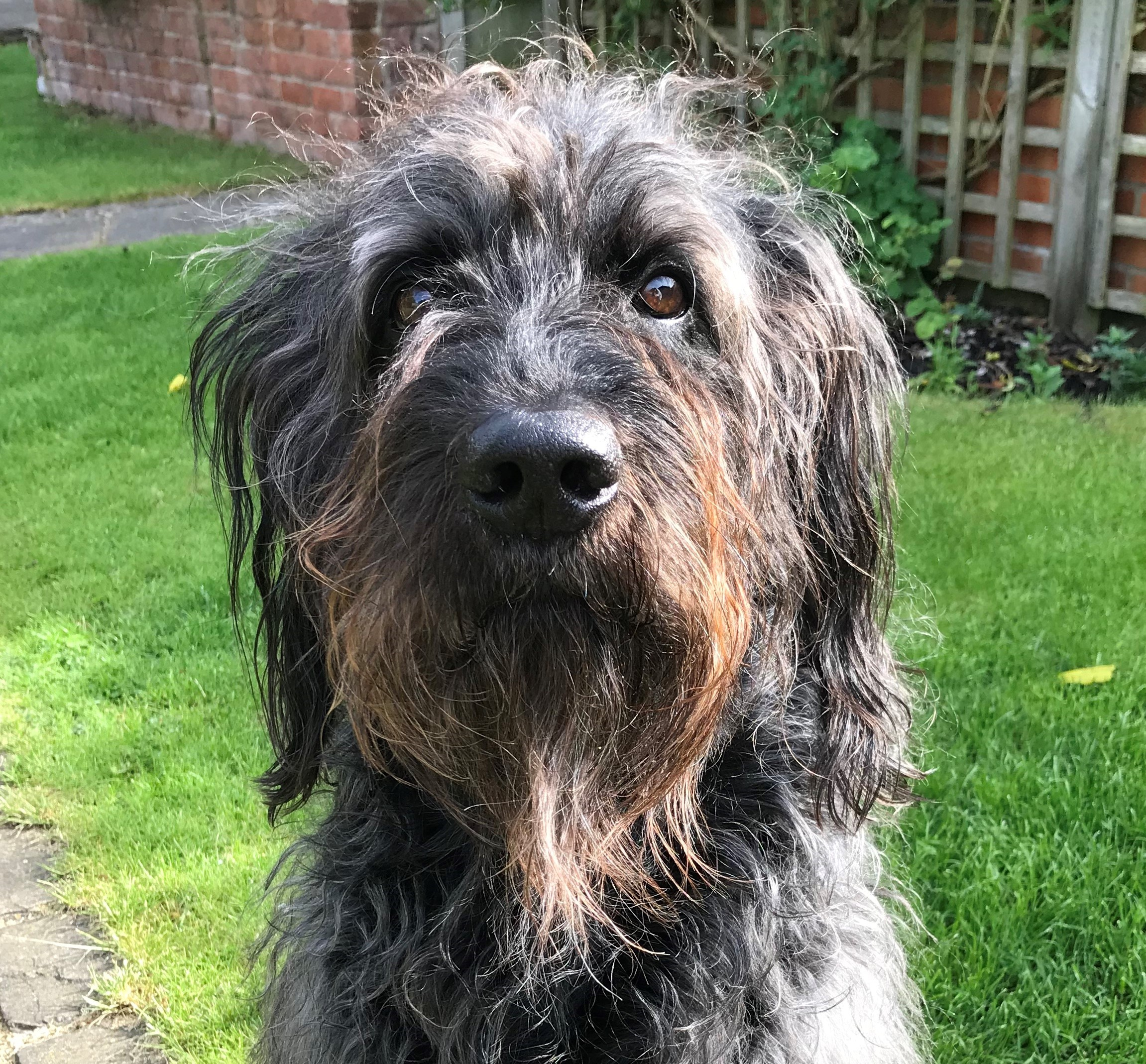 Dog contracted Alabama Rot