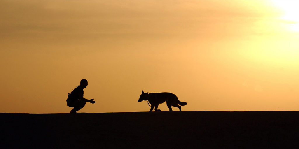 evening exercise for working dog