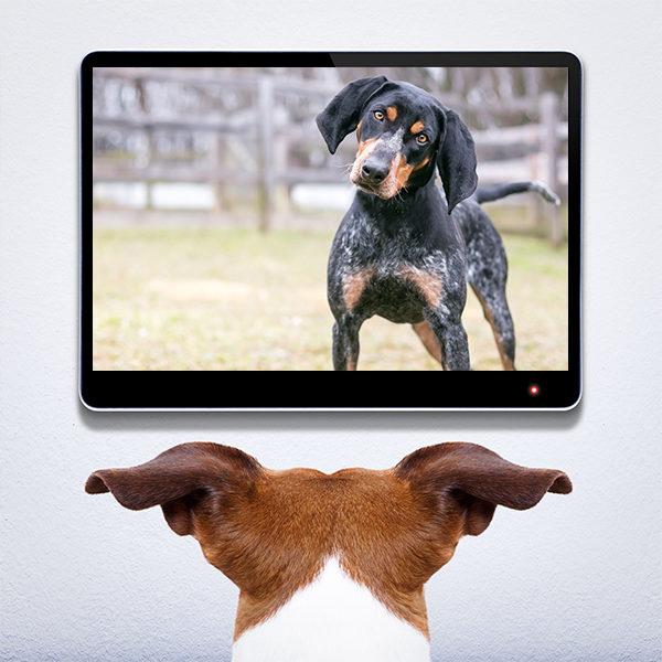 Dog on video call
